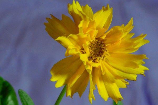 DSC_0404 vor lila